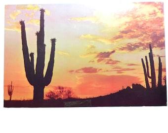 Vintage Desert Sunset Postcard Cactus Postcard Desert Landscape Postcard Kodachrome Postcard Vintage Postcard Arizona