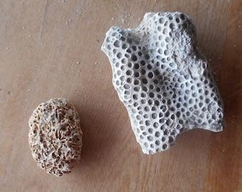 Coral specimen | Etsy
