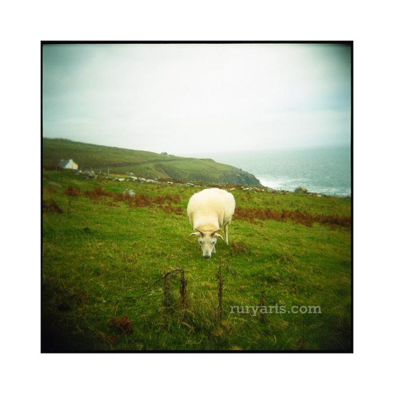 Wild Atlantic Way Sheep  Giclée Print from Holga Photograph image 0