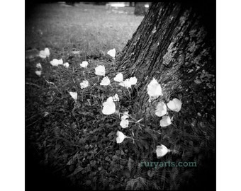 Buttercups - Giclée Print from Holga Photograph, Black-and-White Film