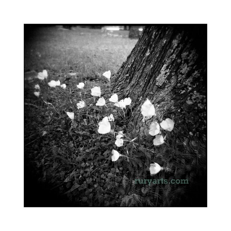 Buttercups  Giclée Print from Holga Photograph image 0