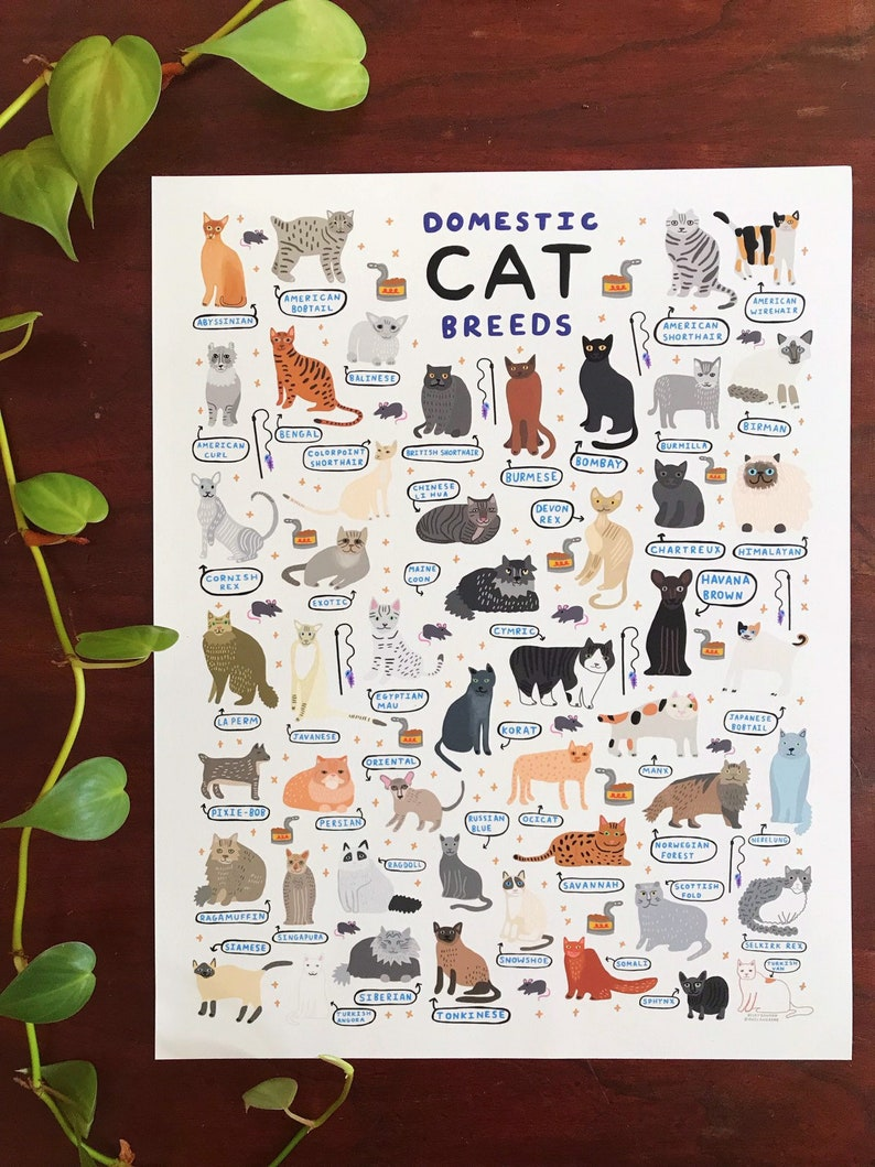 Domestic Cat Breeds  Art Print  8x10 image 0