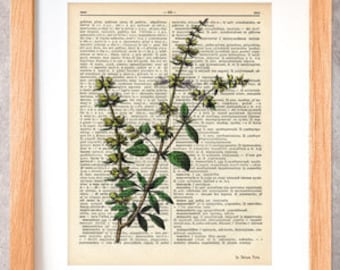 Basil herb print-basil dictionary print-Kitchen wall art-Basil on book page-herbs and spices print-botanical print-by NATURA PICTA-DP040
