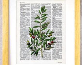 Stampa grafica rametto di olivo-erbe e spezie-stampe vintage per la cucina-arredo cucina-design by NATURA PICTA-Made in Italy-DP047
