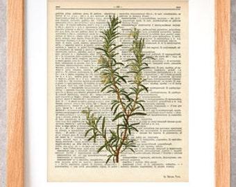 Rosemary herb dictionary print-Kitchen wall art-Rosemary on book page-Rosemary herb spices print-Botanical Herb Print-by NATURA PICTA-DP038