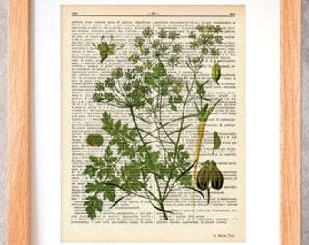 Parsley herb dictionary print-Kitchen wall art-Parsley on book page-Parsley herb print-herbs and spices prints-botany art-NATURA PICTA-DP037
