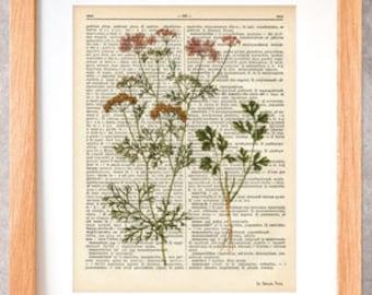Cilantro herb dictionary print-Kitchen wall art-Cilantro on book page-cilantro print-herbs and spices prints-home decor-NATURA PICTA-DP039