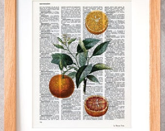 Orange fruit dictionary print-Kitchen wall art-Orange fruit print-Orange on book page-Botany print set-orange decor-by NATURA PICTA DP003