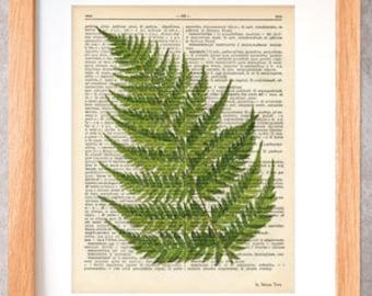 Fern print-fern dictionary print-ferns wall art-fern on book page-botanical print-rustic print-ferns set-fern poster-by NATURA PICTA-DP048