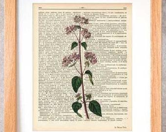Oregano herb print-oregano dictionary print-Kitchen wall art-oregano on book page-herbs and spices print-botanical print-NATURA PICTA-DP095