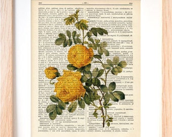 Yellow rose flower print-yellow rose flower dictionary print-Rose flower print-Botanical print-Flower print-home decor-by NATURA PICTA-DP134