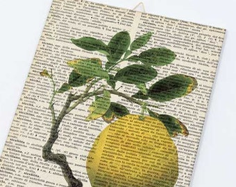 Lemon fruit dictionary Canvas board-kitchen wall art-lemon fruit canvas panel-vintage fruit wall art-fruit wall art-by NATURA PICTA CB025