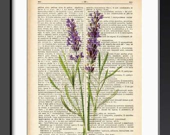 Lavender flower print-lavender flower dictionary print-french print-lavender on book page-botanical print-flower print-by NATURA PICTA-DP148
