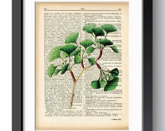 Ginkgo biloba botanical print-ginkgo biloba wall art-ginkgo biloba-home decor-nature print-garden print-rustic print-gift idea-NATURA PICTA
