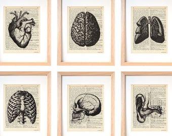 Stampe grafiche anatomia-stampe anatomia set da 6-arredo pareti-stampe dizionario-regalo per lui-idea regalo-regalo per lei-stampe-DP232