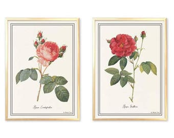 Set of 2 roses flowers print-rose flower print-antique rose flower print-flower print-garden print-rustic print-home decor-by NATURA PICTA