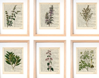 Kitchen herbs wall art set of 6-set of 6 herbs dictionary prints-kichen print set-botanical print-herbs spices wall art-NATURA PICTA-DP183