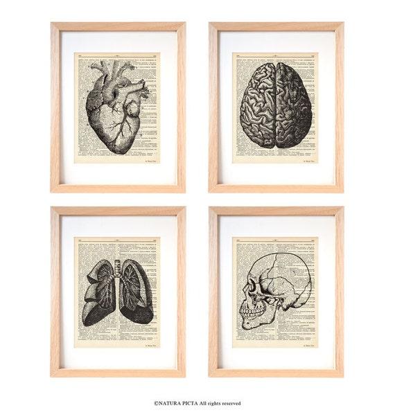 Anatomy Print Set Of 4 Anatomy Dictionary Prints Home Etsy