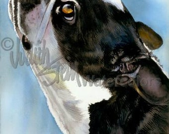 """Boston Terrier AKC Terrier, Pet Portrait Dog Art, Watercolor Painting Print, Wall Art, Home Decor, """"Here's Looking at You"""" by Judith Stein"""