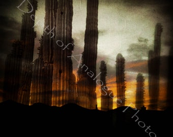 Desert Ghosts