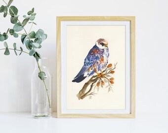GICLÉE PRINT: Hawk Design