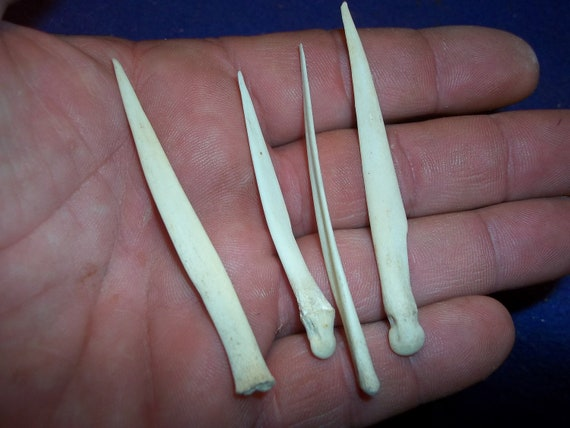 20 Deer Dew Claws Jewelry and Craft Projects Coyote Skull Teeth