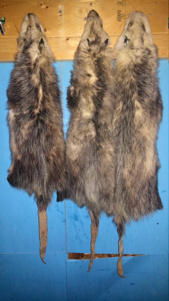 1UNTanned O/'POSSUM SKIN,Fur//Hide,Crafts,FlyTying,Taxidermy,Dog Hunting//training3