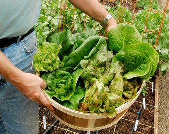 Salad Garden Planting Plan