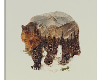 iCanvas Bear I Gallery Wrapped Canvas Art Print by Andreas Lie - ALE17-1PC3-12x12