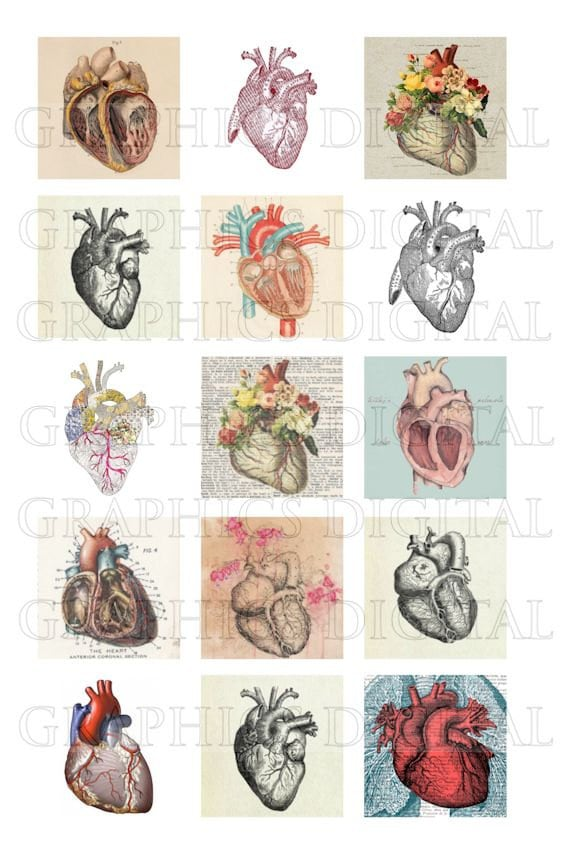 Dibujos anatómicos de anatomía de corazón anatómico corazones   Etsy