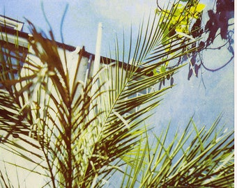 Palm II - A3 Risograph print - leaves - natural -