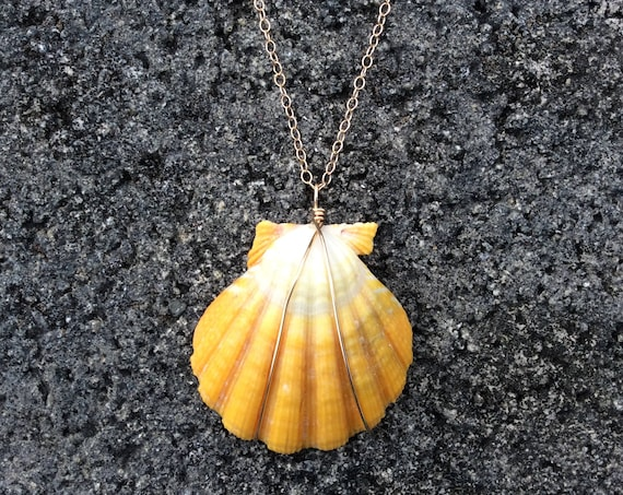 Hawaiian Sunrise Shell,  Yellow, Green, White, Fresh Water Keshi Pearl, 14k Gold Filled Cable Chain Necklace