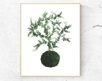 Maidenhair Fern Art Print, Japanese Kokedama plant, Watercolor Painting, Nature Illustration