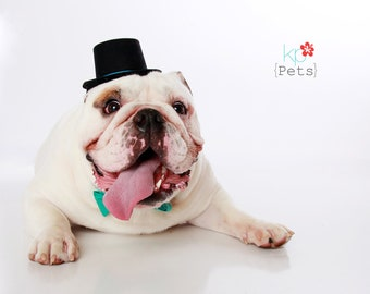 Chaplin Dog Top Hat and Bow Photo Prop by Couture Canine, Dog Hats, Wedding Dogs, Wedding Pet hat, Pet Wedding Costume