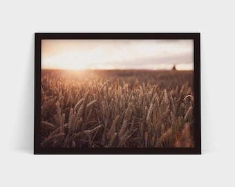 The Harvest - Original Photographic Print