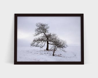 Winter Trees - Original Photographic Print
