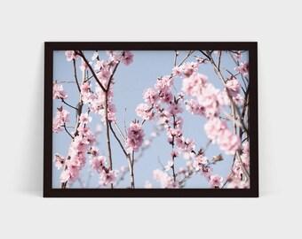 Cherry Blossom 2 - Original Photographic Print