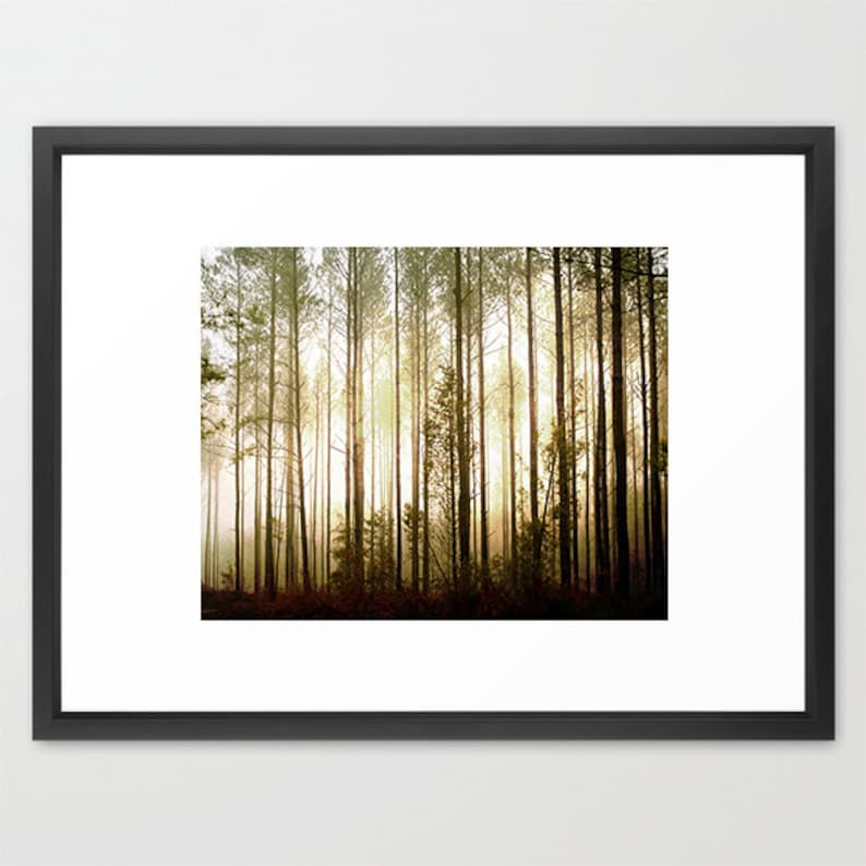 Nature Photography, Arboreal Art Tree Photography- Glowing Forest Print Brown Gold Black Foggy Light Tall Pines Photo Mysterious Mist