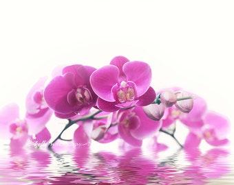 Orchid Photography- Pink Orchids, Moth Orchids Print, Flower Photography, Pink Wall Art, Feminine Art, Spa Decor, Zen Decor, Floral Wall Art