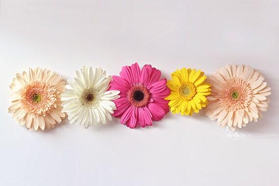 Gerbera Daisy Photograph Gerber Daisies Flower Photography Etsy