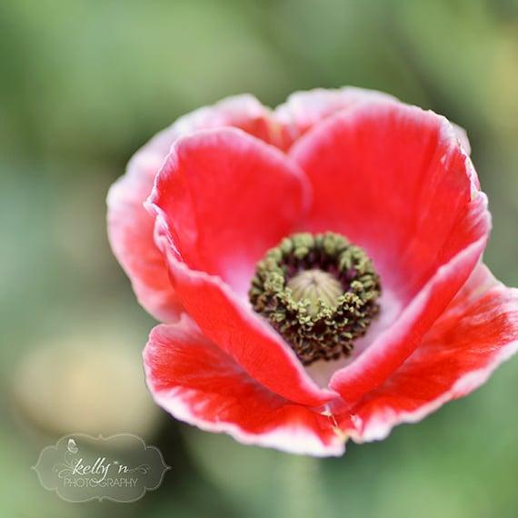 Poppy flower photography red poppy flower photography heart mightylinksfo