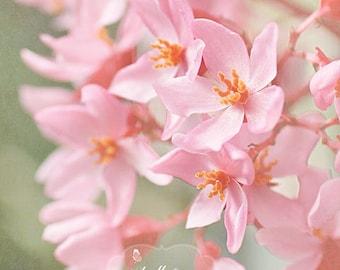 Pink Flowers Photo- Nature Photography, Floral Wall Art, Pink Orange Art, Flower Photography, Pink Begonia Print, BotanicalArt, Garden Art