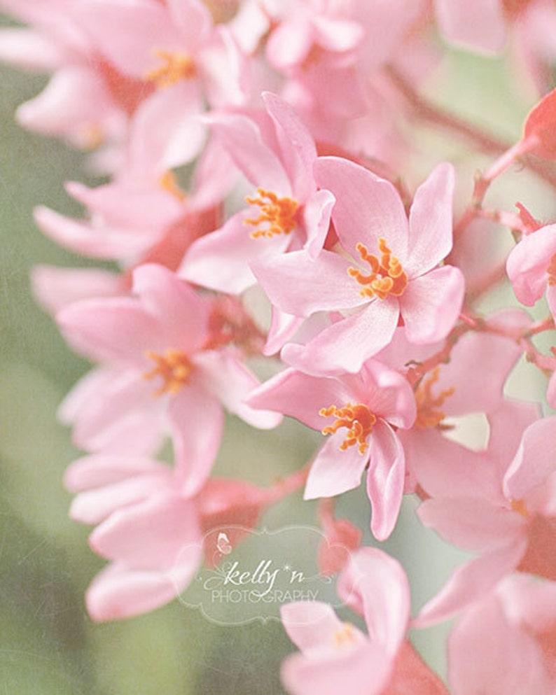Pink Orange Art Garden Art Pink Flowers Photo- Nature Photography Flower Photography Floral Wall Art Pink Begonia Print BotanicalArt