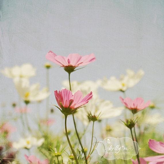 Flower photography cosmo flowers photo pink blue white etsy image 0 mightylinksfo