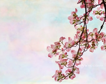 Flower Photography- Nature Photography, Floral Wall Art, Pink Dogwood Flowers Print, Pastel Colors, Nursery Decor, Dogwood Photo, Pink Blue