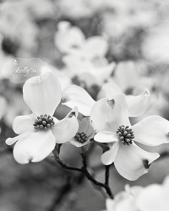 Black and white flower photography dogwood flowers photo etsy image 0 mightylinksfo