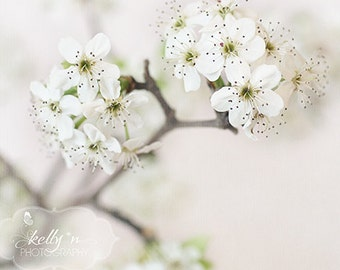 White Blossoms Photo- Flower Photography, Bradford Pear Blooms, Floral Still Life, White Wall Art, Floral Home Decor, Spring Flower Print