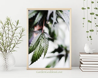 Dreamy Leaf 1, Fine Art Cannabis Photography Print, Instant Digital Download, Beautiful Cannabis Photography Art Print, Printable Canna Art