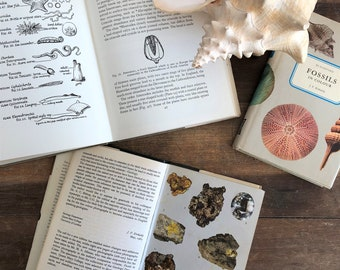 Vintage Fossil, Mineral & Rocks reference guides