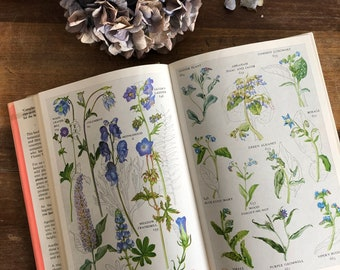 Collins Guide to Wild Flowers